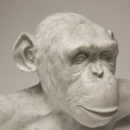 Marble Chimp. Bust,
