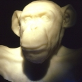 White ape 1999, LimelIght Installation, LiebmanMagnan Gallery, New York
