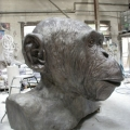 Chimp. Bust,2009, Bronze,300cm x200cm x150cm,  Commission