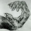 chimpanzee-female-hand